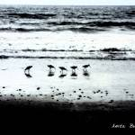 """Sandpipers on Torrey Pines Beach2"" by AnitaBurnsArt"