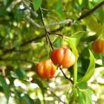 """Brazilian Cherries"" by J9Photography"