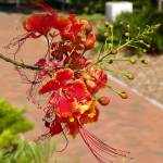 """Orange Flower"" by J9Photography"