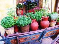 Old Greek cart filled with ptted herbs and flowers