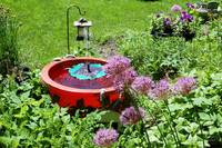 Solar Fountain & Alliums