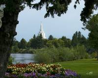 20x24 From the Park Idaho Falls Temple