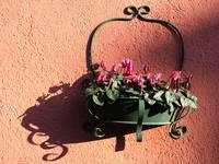 Shadows From Cyclamen