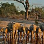 """Elephants Happy Hour"" by photocell"