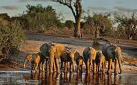 Elephants Happy Hour
