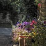 """""""Flowerpot"""" by InspiraImage"""
