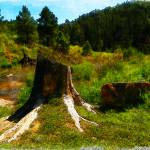 """Rock and Tree"" by marla"