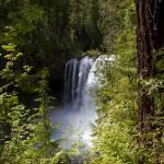 """""""A Forest Waterfall"""" by pbk"""