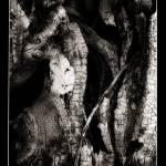 """""""fallen tree"""" by tbock"""