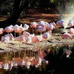 """""""Convocation in Pink"""" by RCdeWinter"""