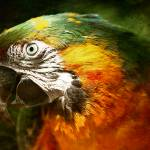 """Colourful Parrot"" by Rafferty-Evans"