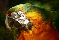 Colourful Parrot