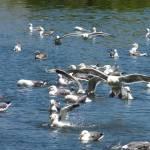 """Gulls"" by WuziCat"