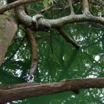 """""""Stowe Lake Reflections"""" by WuziCat"""