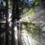 """""""Sunbeams Through Fog"""" by WuziCat"""