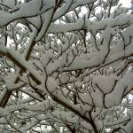 """SNOWY BRANCHES"" by icreate"