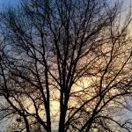 """FALL TREE SUNDOWN"" by icreate"