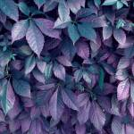 """""""COLORFUL LEAVES"""" by icreate"""