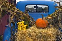 The Old Blue Pick-Up Truck Decorated for Autumn