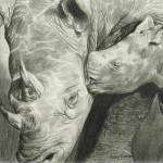 """Rhino Love"" by CarlaKurtArt"