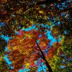 """Fall Arrives ..."" by whatawonderfulworld"