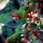 """""""Parrot Peek"""" by LukeMurphy"""