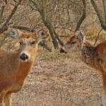 """Deer Hangout  FINS Long  Island NY"" by jkphotos"