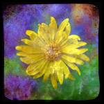 """Yellow Daisy"" by JamesHanlon"