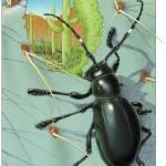 """""""Cactus Beetle"""" by PalmaRoca"""