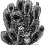 """""""Cholla and Cactus Wren"""
