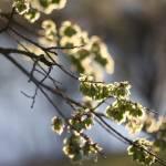 """Spring is coming"" by christopherleonard"