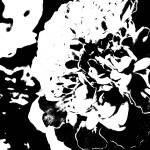 """Black and White Marigolds"" by kat_muzic"