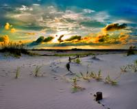 Gold Sunset Beach Sand Dunes Fine Art Giclee Print