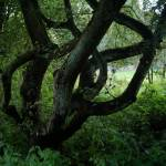 """""""Fairy Tree"""" by Barbara_Stock"""