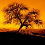 """""""The Lonely Tree - (Orange)"""" by Hotash"""