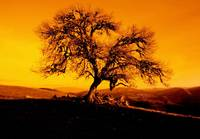 The Lonely Tree - (Orange)