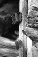 Old Winslow Cabin Screen-door Hinge