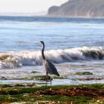 """""""gaviota coast"""" by artfilmusic"""