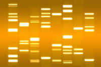DNA Art Gold