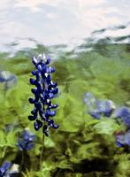 Painterly Bluebonnets