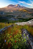 Mount St Helens Dawn Photography/Color Landscape