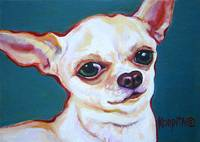 Puddy - Cute White Chihuahua Funny Dog