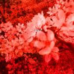 """""""Copy of redness"""" by IndigoPoet"""