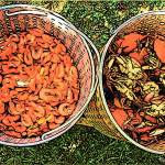 """Shrimp and Crab Boil - Southern Seafood Louisiana"" by RebeccaKorpita"