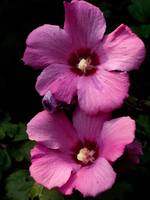Mr. & Mrs. Rose of Sharon taking in the sun