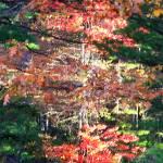 """Fall Reflections"" by ackerman"