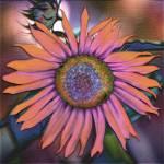 """Sunflower"" by SherylKaras"