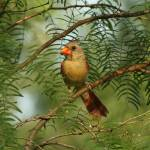 """""""King Ranch Bird 1"""" by PhotographicsUnlimited"""
