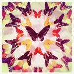"""Butterflies"" by billoneil"