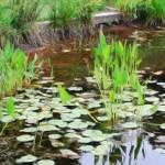 """""""Enjoying the Pond"""" by esteemededww"""